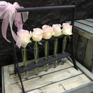Розы в Пробирках